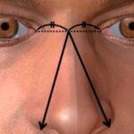 El tamaño de la nariz es proporcional tamaño del pene